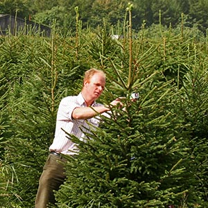 wholesale christmas tree shaping